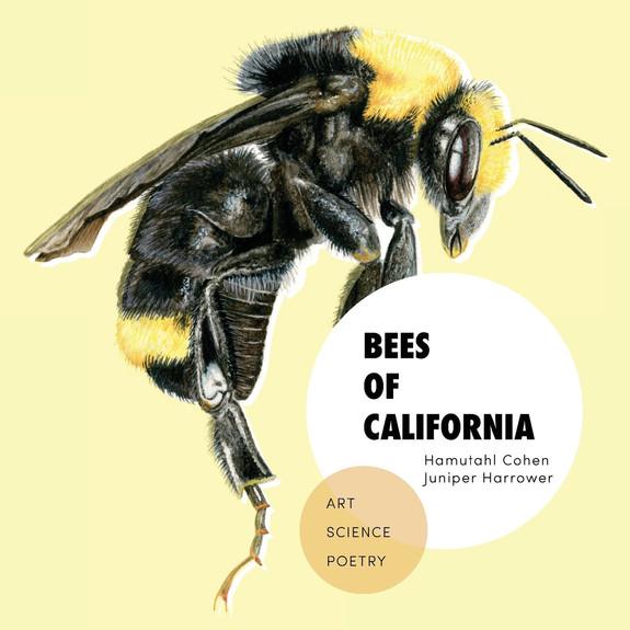 Bees of California book