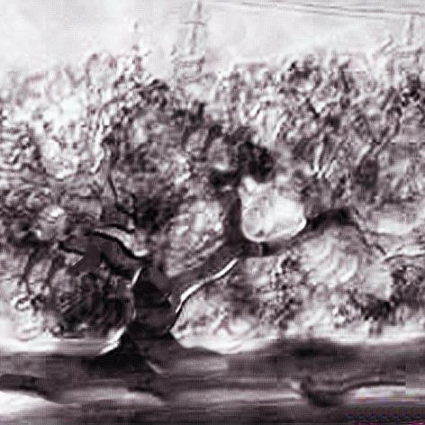 Joshua tree root with fungal tree