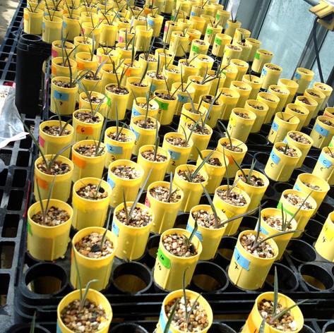 Seedlings at 6 months
