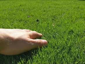 Is top dressing grass important?