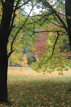 Autumn DAY.jpg