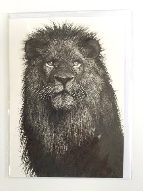 Lion at First Light // Greeting Card