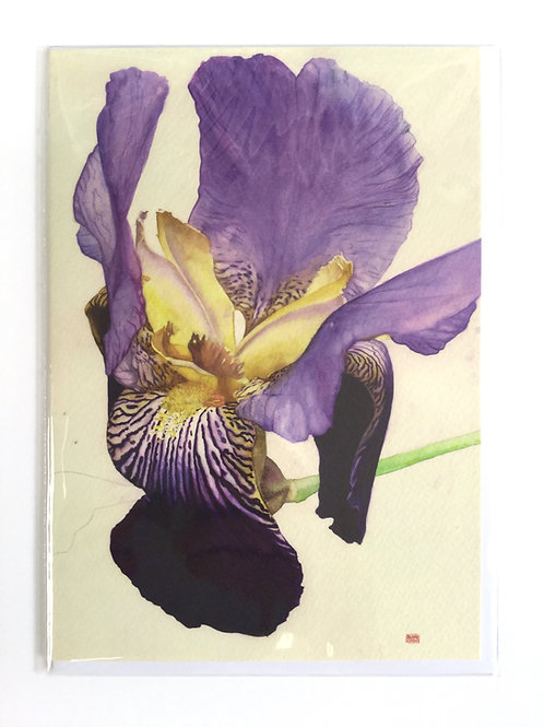 Golden Purple Bearded Iris // Greeting Card