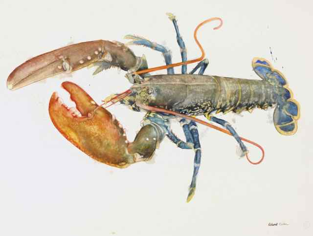 Blue Lobster with Orange Claws