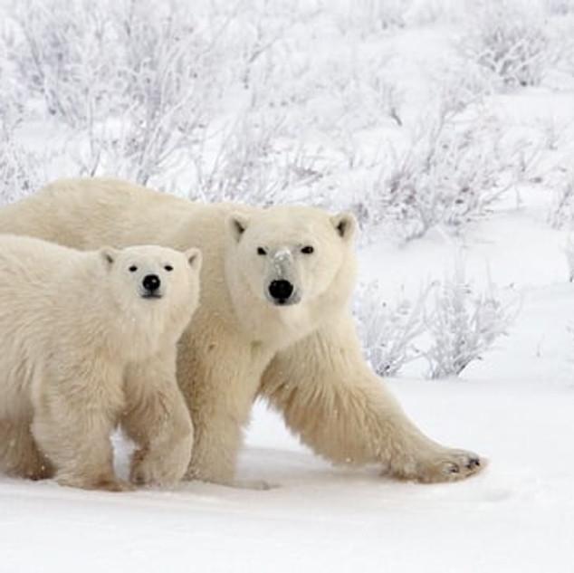 L'Àrtic es trenca d'Andoni Canela