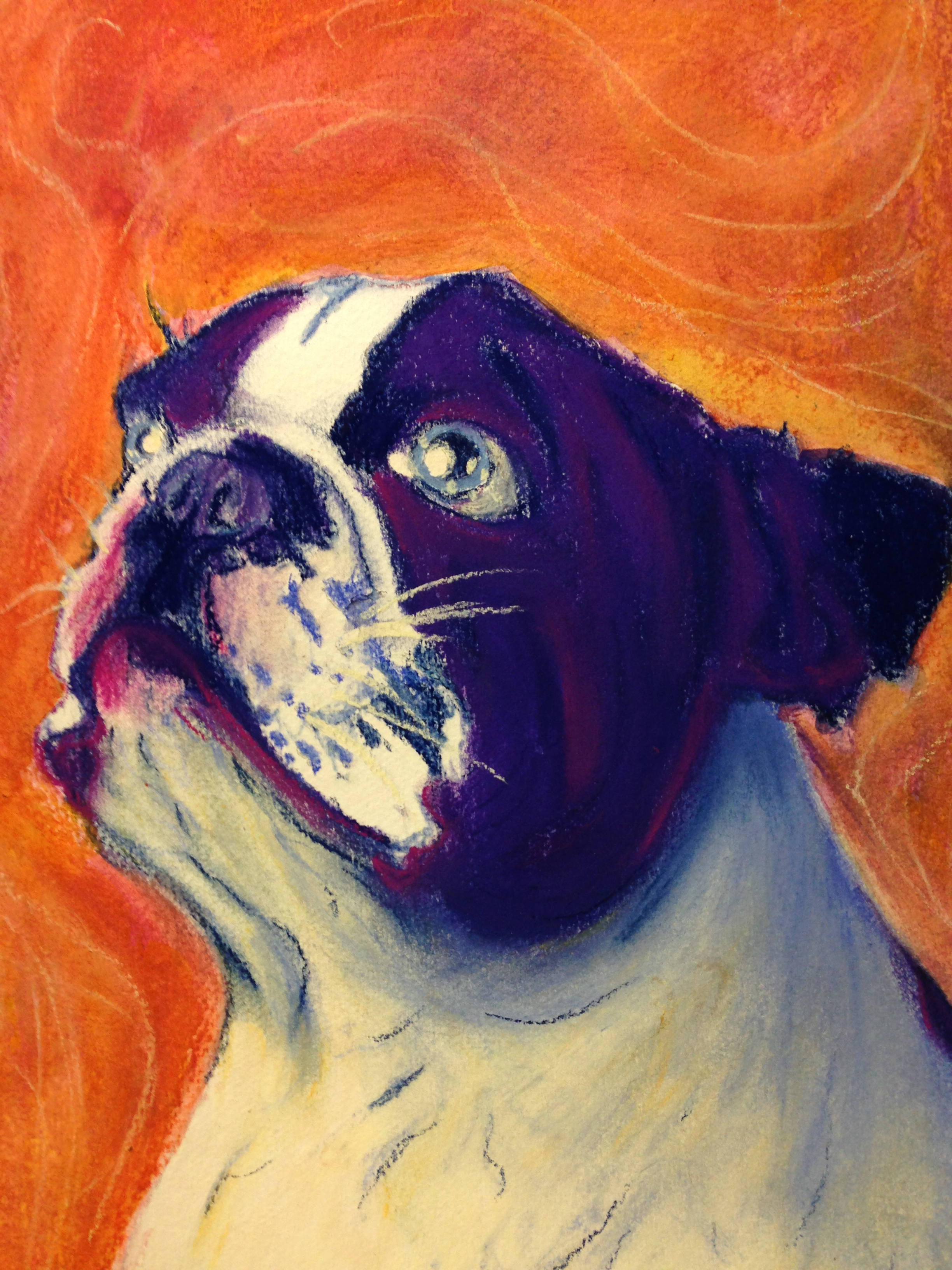 Boston Terrier Commission