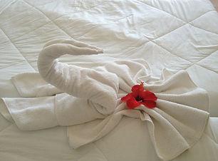 swan-200461_1920.jpg