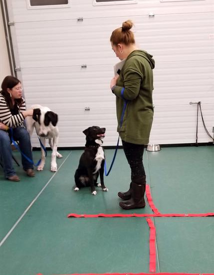Dog-Focusing-Basic-Manners
