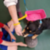 Puppy exploring objects in Puppy Class