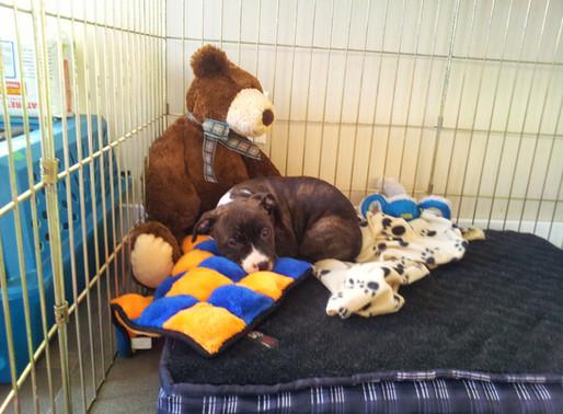 New Dog/Puppy? Start Here...
