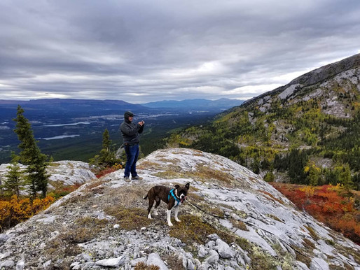 Is your dog ready for off-leash adventures?