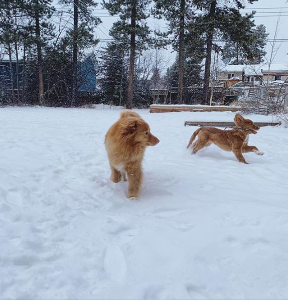 Puppy and Adult dog playing outside