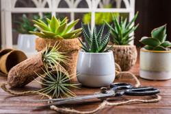 succulent minis.jpg