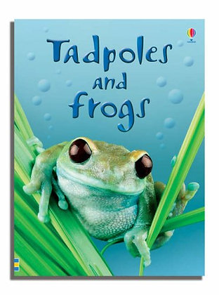 Tadpoles and Frogs (Hardback)