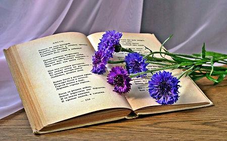 «Стихов немало есть на свете»