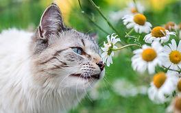 «Планета кошек и котов»