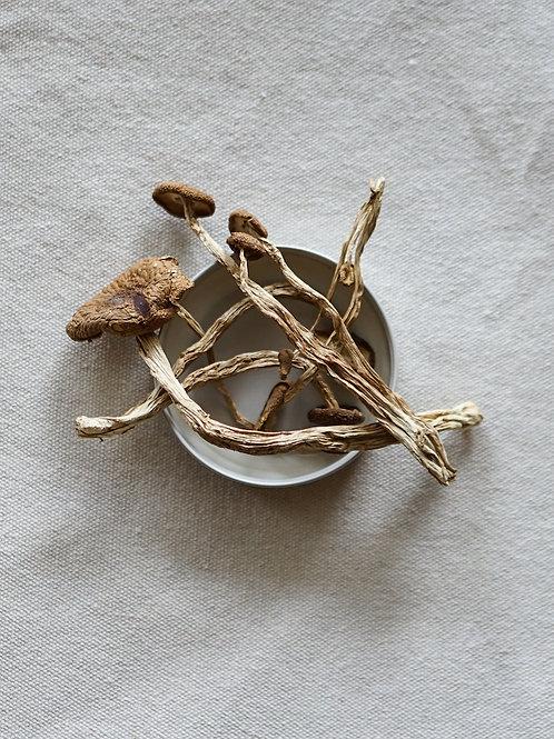 Organic Dried Tea Tree Mushroom