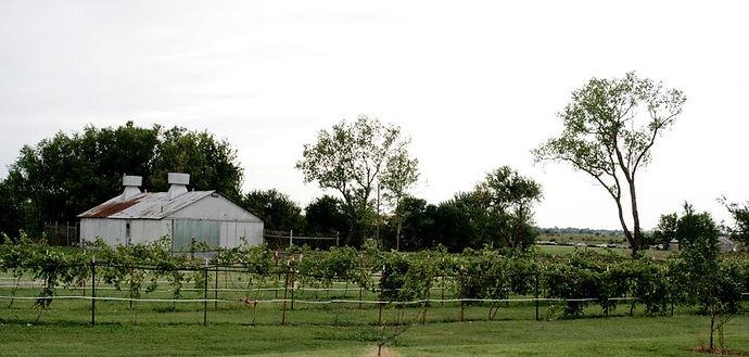 Prairie Rattler Winer | Shidler Oklahoma | Vinyard