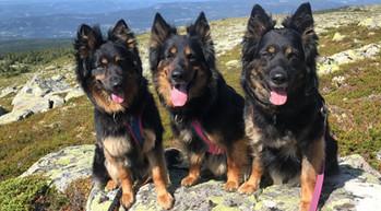 3 jentene til Inger Lise