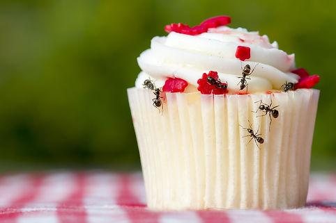 Ants and cupcake .jpg