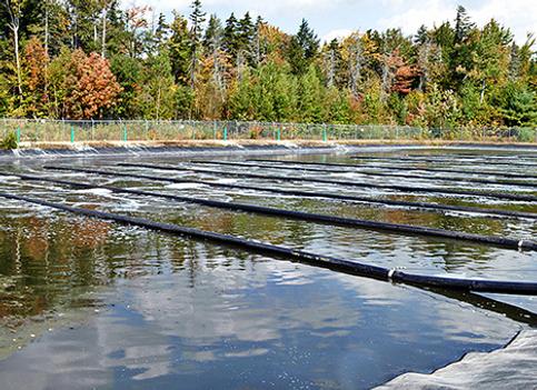 lagoon closures