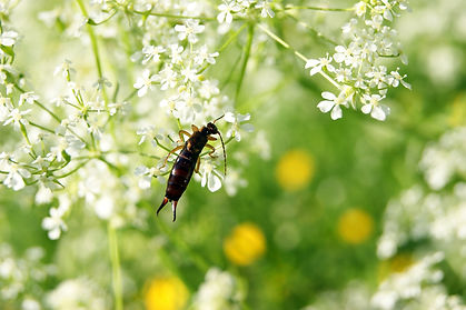 General pest control in Spanish Fork