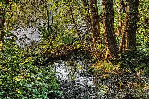 Wetlands Restoration