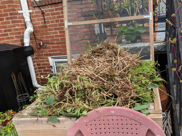 Fall plantings, summer's lessons