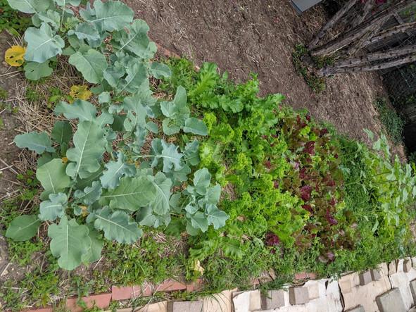 Community garden plot update