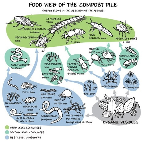 Gardening for good bugs part IV: soil and compost bugs