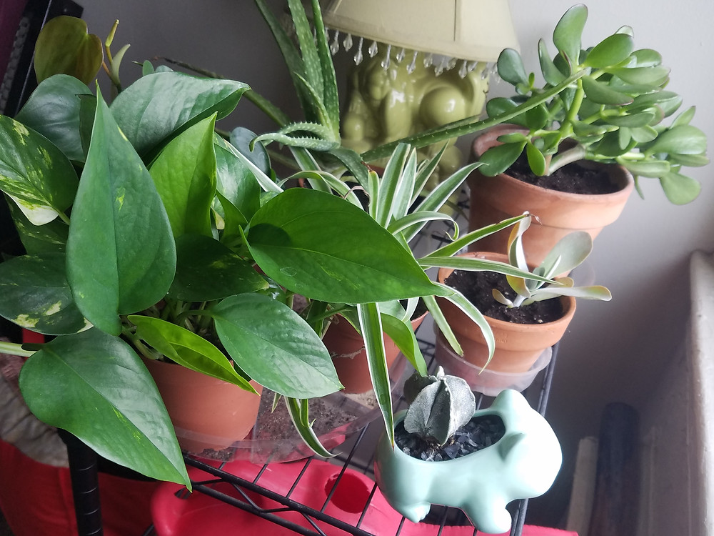 some of my houseplants