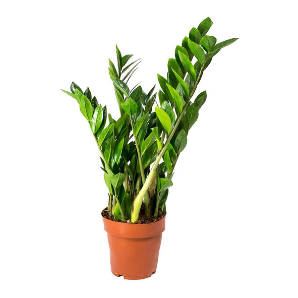 Recommended houseplants for beginners