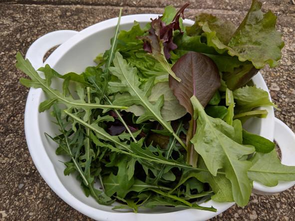 Update: outdoor and indoor gardens