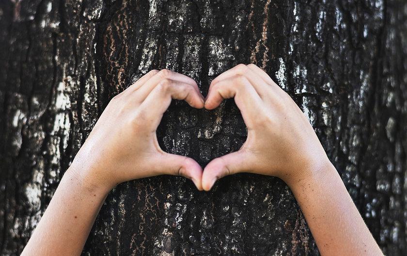Hand heart on Tree.jpg