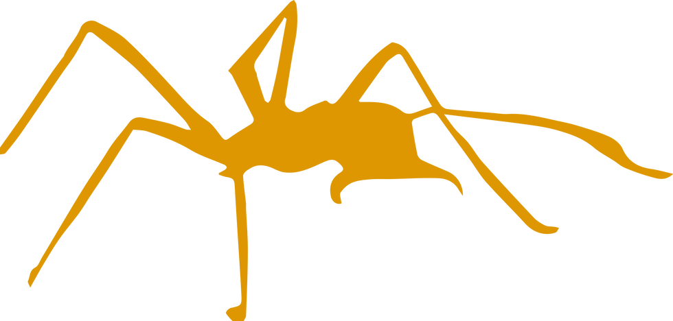 spider_yellow_no_bg.png