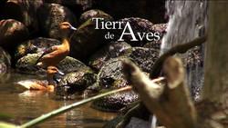 TIERRA DE AVES