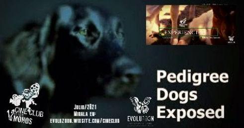 Pedigree_Dogs_Exposed (1).jpg
