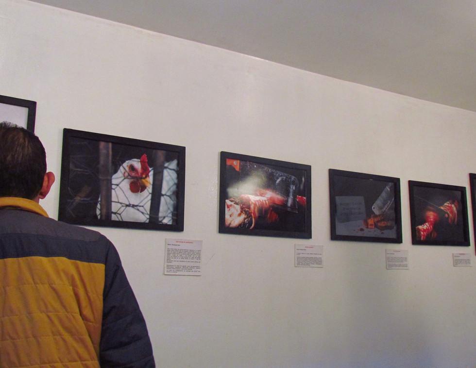 EvoluZOOn Exposiciones artísticas Cine Animal Fest