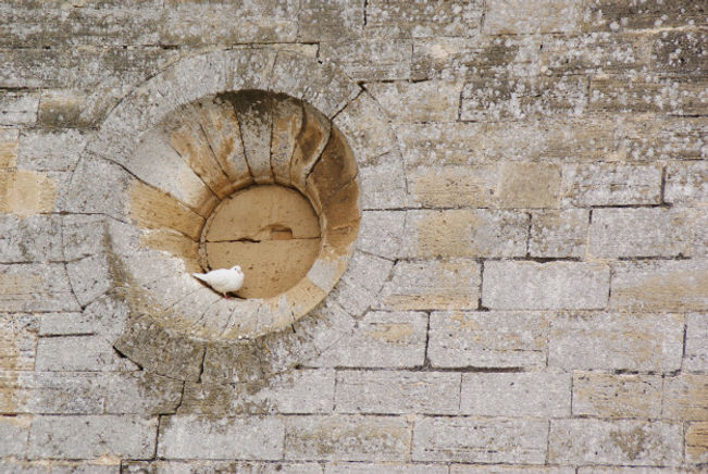 white-dove-perched-hollow-round-window-s
