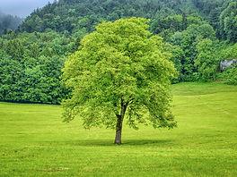 tree-5278813_1920.jpg