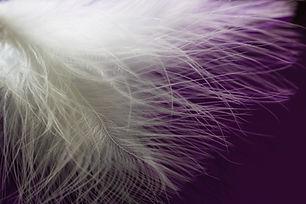 feather-1598306_1920.jpg