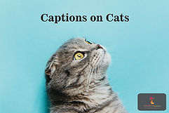 Captions on Cats