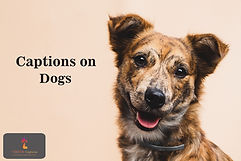 Captions on Dogs