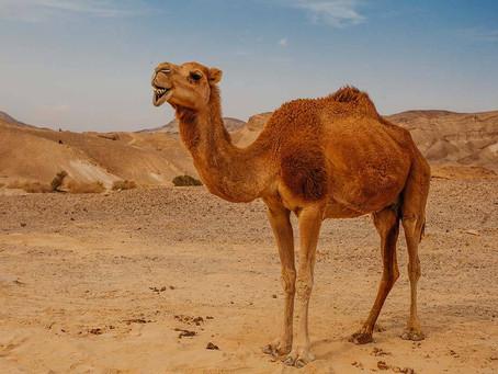 Instagram Hashtags on Camel:-