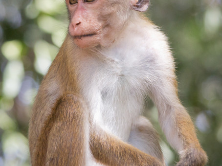 Instagram Hashtags on Monkey:-