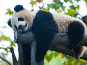 Instagram Hashtags on Panda:-