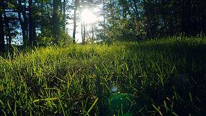 trava-polyana-priroda-leto.jpg