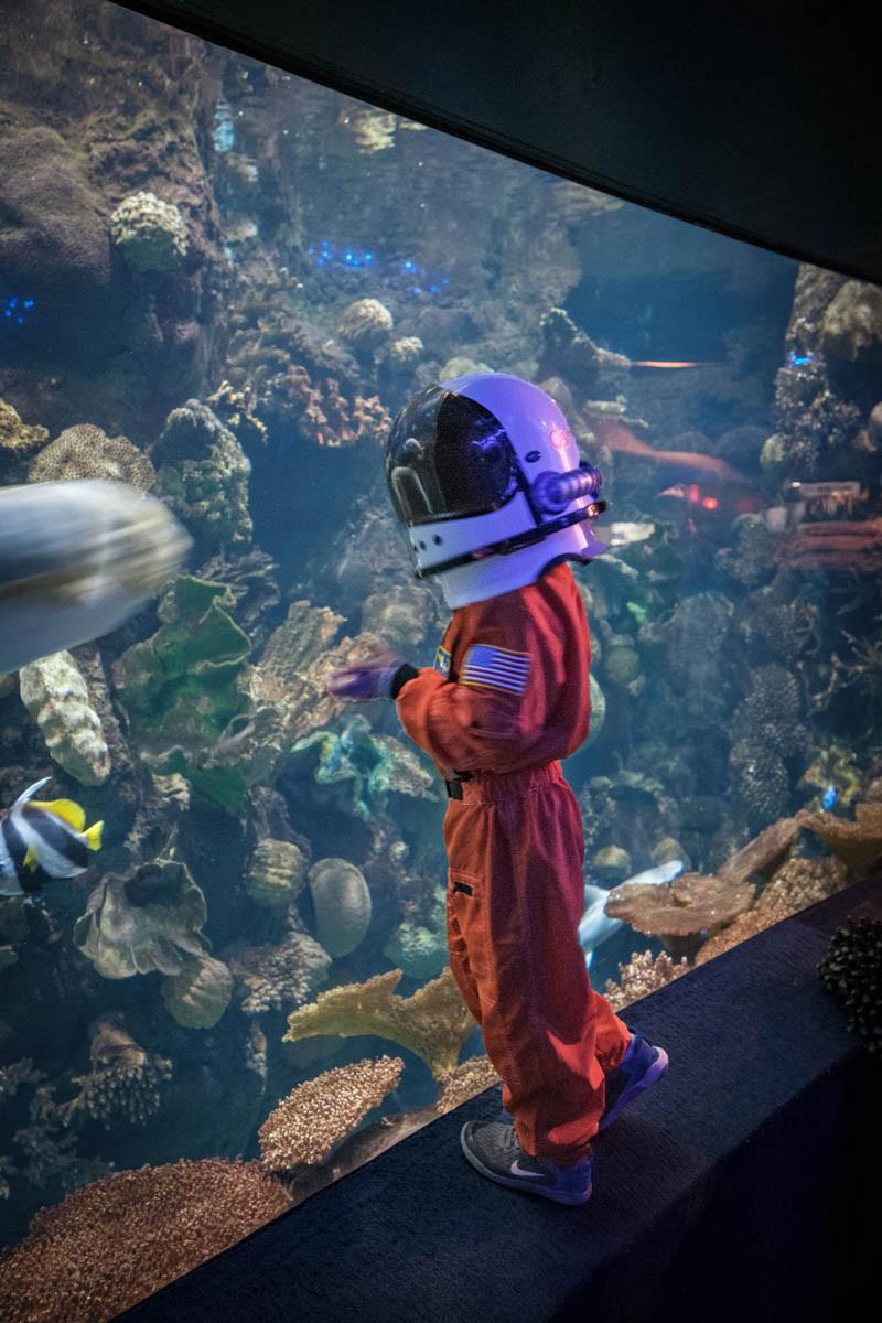 Taking a deep dive in at the Aquarium