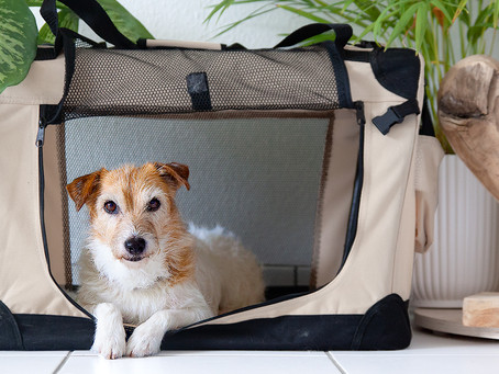 5 Benefits of Crate Training your Dog - Transcript