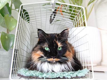 Should You Crate Train Your Cat?